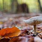 On the forest floor by Sue Frank