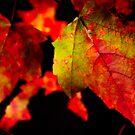 Colors by Phillip M. Burrow