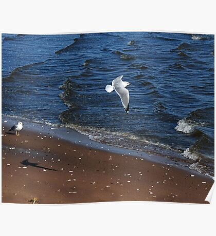 Seagull Waves Poster