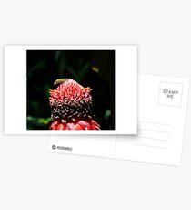 The lizard pops up. Postcards