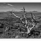 Valley View by tgarrett