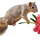 Squirrel with Peony by catsclips