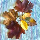 Autumnal Still Life by Carol Bleasdale