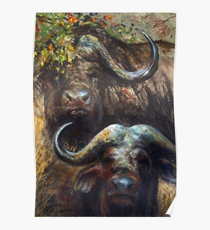 Kruger Park Buffalo Poster