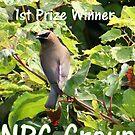 NPC Banner by Dawn Barger
