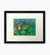 Water Willow Framed Print