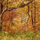 Autumn Forest by FrankieCat