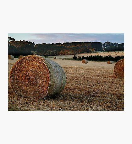 Making Hay,Fresh Water Creek Photographic Print