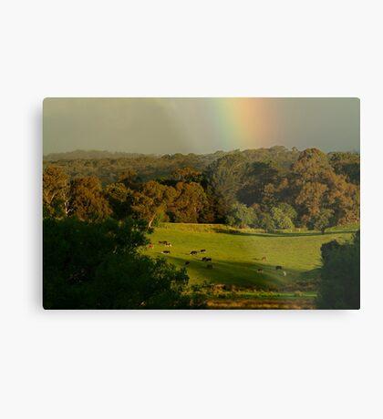 Late Light, Otway Farmlands Metal Print