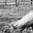 horse by deadbilly