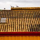 Four Birds on a Roof by Jack Jansen