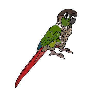 Green Cheeked Conure by nolessjess