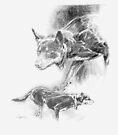 Two Eye Kelpie Dogs Stalking by Pieter Zaadstra