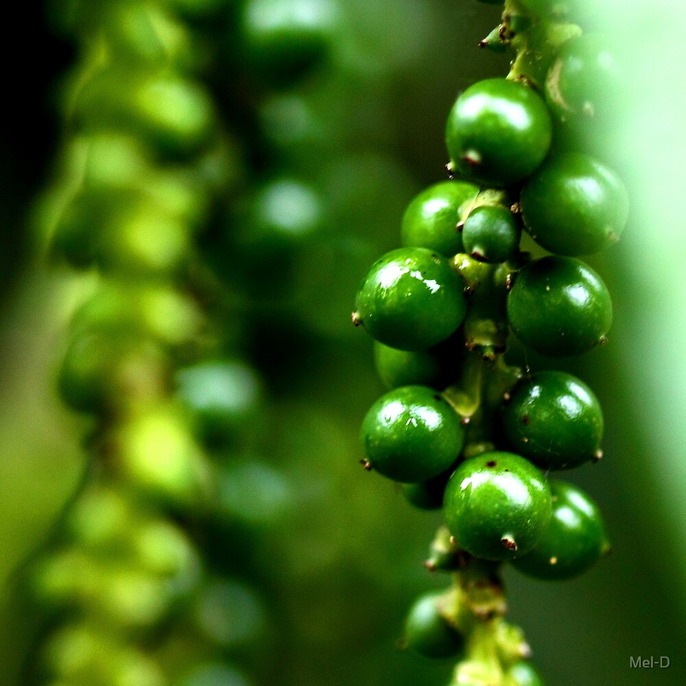 Photography of green paper by Mel-D