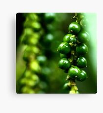 Photography of green paper Canvas Print