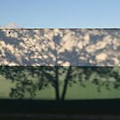 shadow of a tree in  by hidden-design