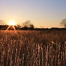 Goodbye Sun by J J  Everson