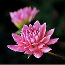 seasons last bloom by Rodney55