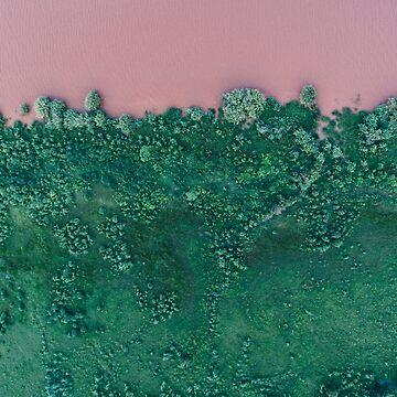PINK LAKE GREENERY by Barbzzm