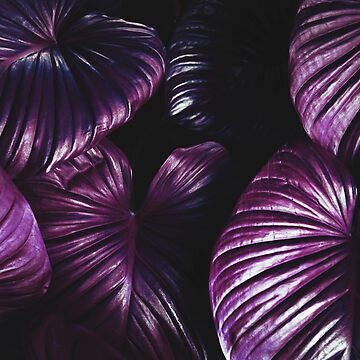 PURPLE LEAVES  by Barbzzm