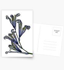 flower cluster Postkarten