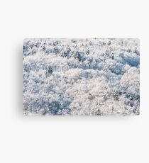 Snow on the wood Canvas Print