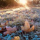 """ Autumn's Frosted Leaves "" by Richard Couchman"