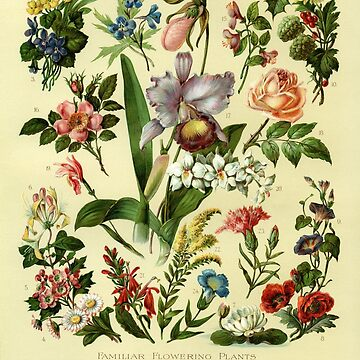 VINTAGE POSTER FLOWERS  by Barbzzm