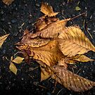 dried leaves by paolo amiotti