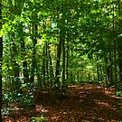 Woods Trees Summer Path Forest Green Nature Photography by candymoondesign