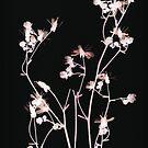 salmon pink on black by elisabeth tainsh