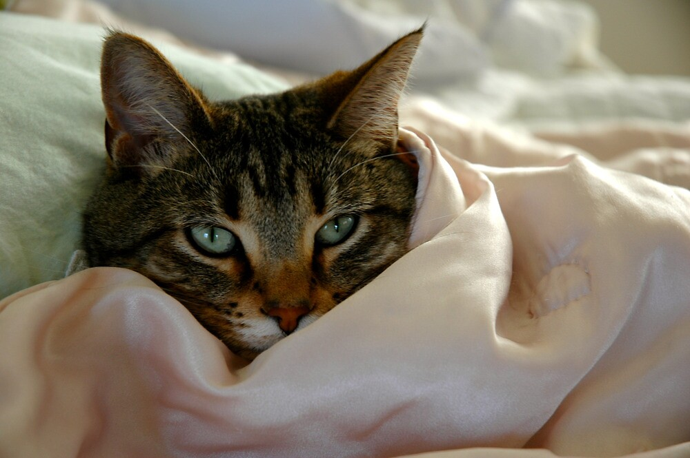 Coy Cat by Ainsley Kellar Creations