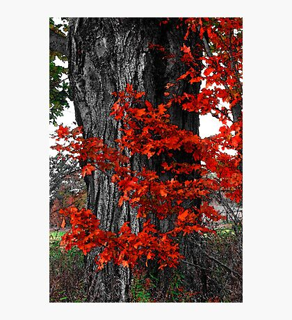 Autumn Hugs Photographic Print