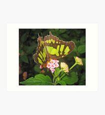 Lime Butterfly Art Print