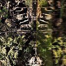 Nature's fractal 3: Northwest Bay Brook, NY by Doug Michael