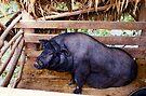 Laos Pig by Betsy  Seeton