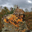 Stump fungus by relayer51