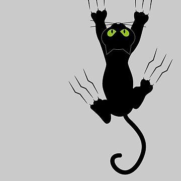 Black cat holding by salah944