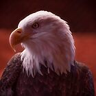 Eagle portrait by Zina Stromberg