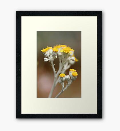Gold 'n' Silver Framed Print