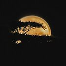 SuperMoon in Torquay von Andy Berry