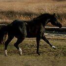 Horse by minskeep