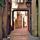 Alley Cats by Barbara Caffell