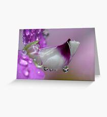 Polygala Greeting Card