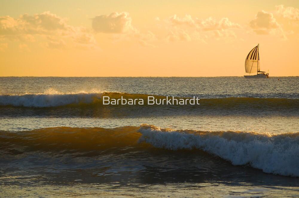 Liquid Gold - Moreton Bay by Barbara Burkhardt