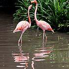 Flamingo Beauty by Marylou Badeaux