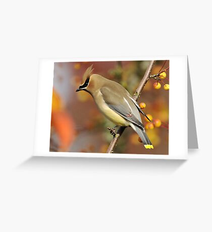 Wild Berry Blend #2 Greeting Card