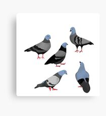 Design 33 - The Pigeons Canvas Print