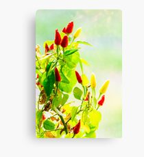 red and yellow peppers grow Canvas Print