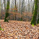 leafless forest in autumn by mike-pellinni